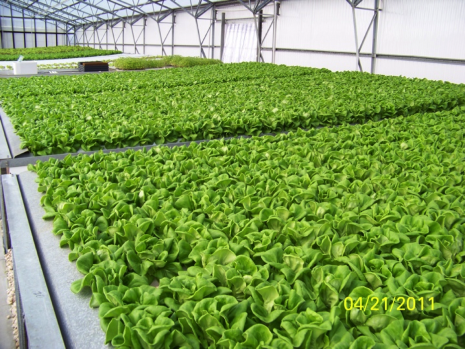 OceanSolution Hydroponics